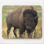 """Buffalo Mouse Pad<br><div class=""""desc"""">This is a photography of a wild Buffalo.</div>"""