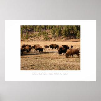 Buffalo of South Dakota Poster
