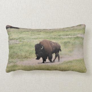 Buffalo on the move, Photography Lumbar Pillow