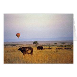 Buffalo on the plain greeting cards
