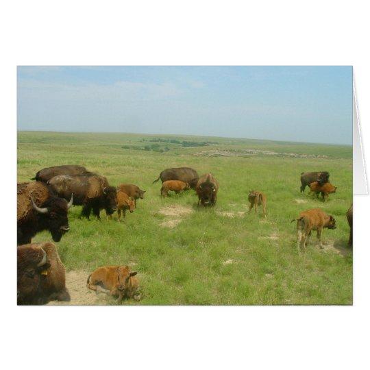 Buffalo on the Plains Card