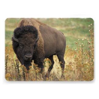 Buffalo on the Plains Custom Announcements