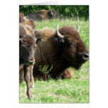 Buffalo Picture Greeting Card