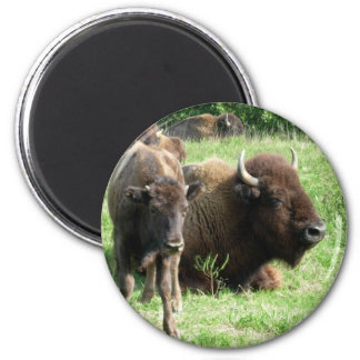 Buffalo Picture Magnet Magnet