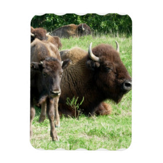 Buffalo Picture Magnet Flexible Magnet