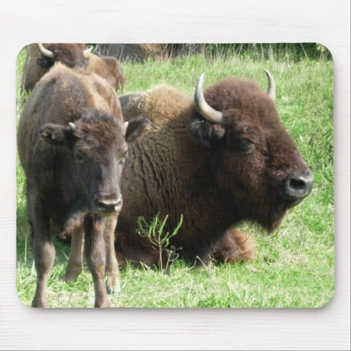 Buffalo Picture Mouse Pad