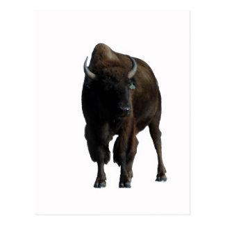 Buffalo Post Card