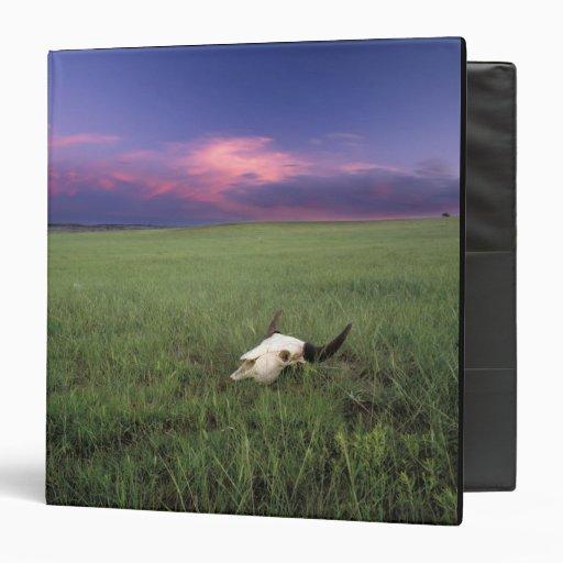 Buffalo Skull in Prairie Grass near Medora Binder