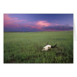 Buffalo Skull in Prairie Grass near Medora Greeting Card