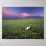 Buffalo Skull in Prairie Grass near Medora Print