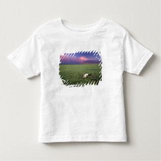 Buffalo Skull in Prairie Grass near Medora T-shirt