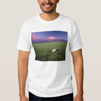 Buffalo Skull in Prairie Grass near Medora T Shirt