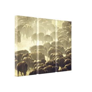 Buffalo Stampede! Canvas Print