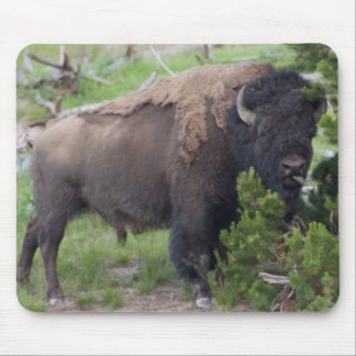 Buffalo Sticking Out Tongue Mouse Pad