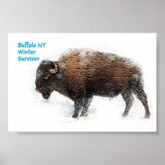 Buffalo Winter Survivor Poster