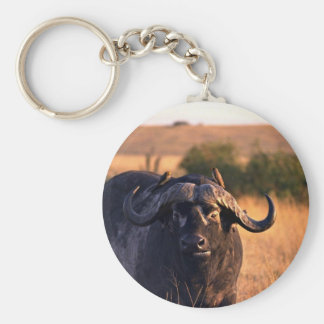Buffalo with two birds in the morning sun keychains