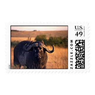 Buffalo with two birds in the morning sun postage