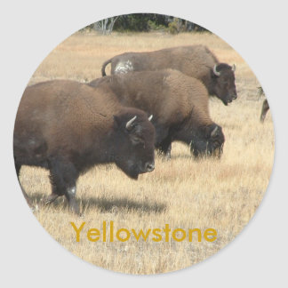 Buffalo Yellowstone Sticker