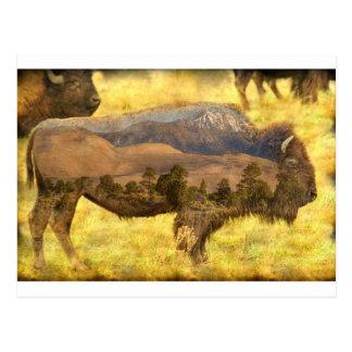 Buffaloe Sand Dunes Postcard