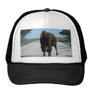 Buffaloed! Trucker Hat