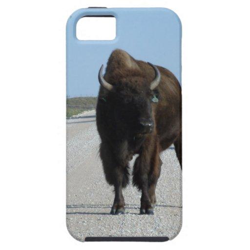 ¡Buffaloed! iPhone 5 Carcasas