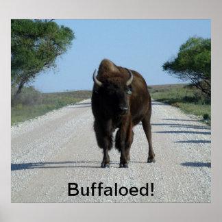 Buffaloed! Poster