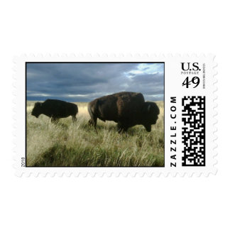 Buffaloes Postage Stamp