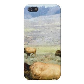 Buffalos Case For iPhone SE/5/5s