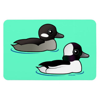 Bufflehead Pair Magnet