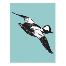Postcard with Bufflehead Sketch design
