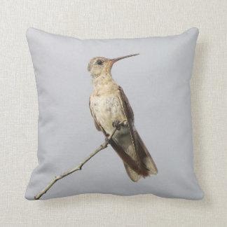 Buffy Hummingbird Leucippus Fallax Bird Watcher's Throw Pillow