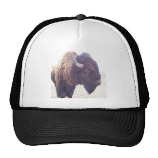 buffy the buffalo hat