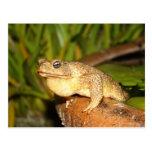 bufo the frog postcard