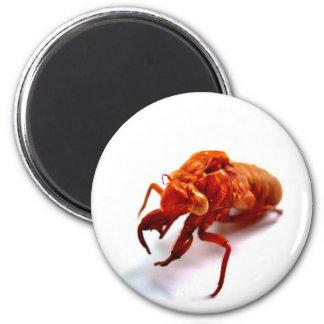 bug 2 inch round magnet