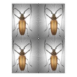Bug Collection - Cockroach Clan Postcard