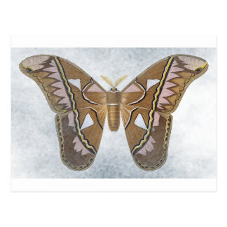 Bug Collection - Moth Post Cards