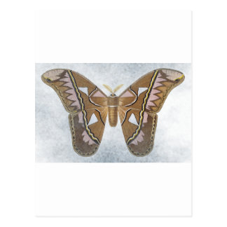 Bug Collection - Moth Postcard