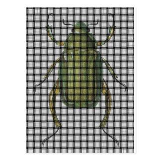 Bug Collection - Weave Beetle Postcard