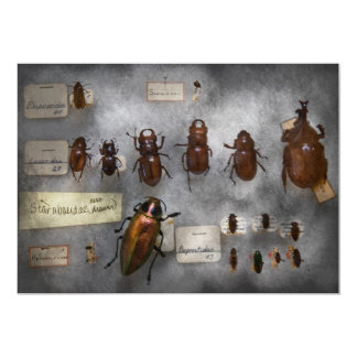 Bug Collector - The insect Collection Card