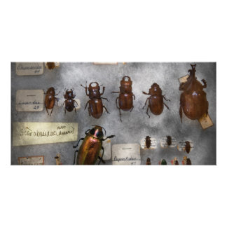 Bug Collector - The insect Collection Photo Card