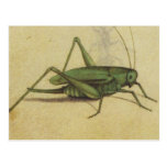 Bug Cricket Vintage Postcards