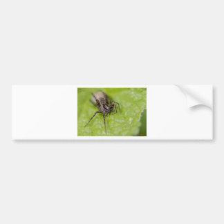 Bug eyed car bumper sticker