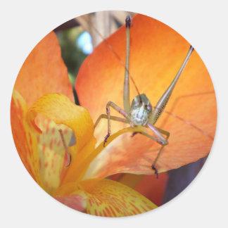 Bug Eyed Orange Classic Round Sticker