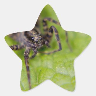 Bug Eyed Star Sticker