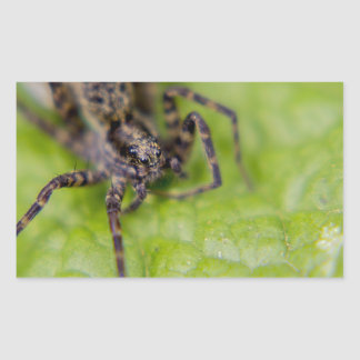 Bug eyed rectangular sticker