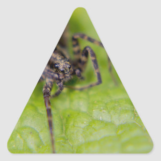 Bug Eyed Triangle Sticker
