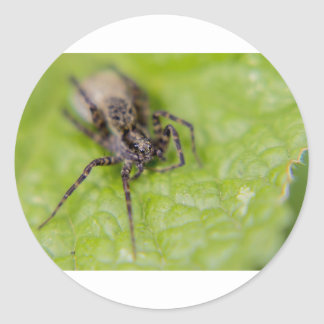Bug eyed classic round sticker