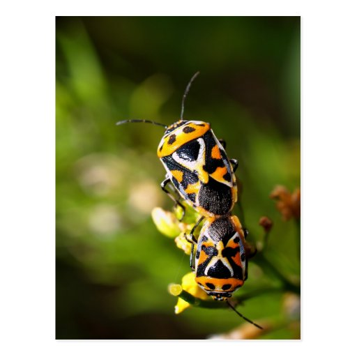bug insect   in  the  nature postcard