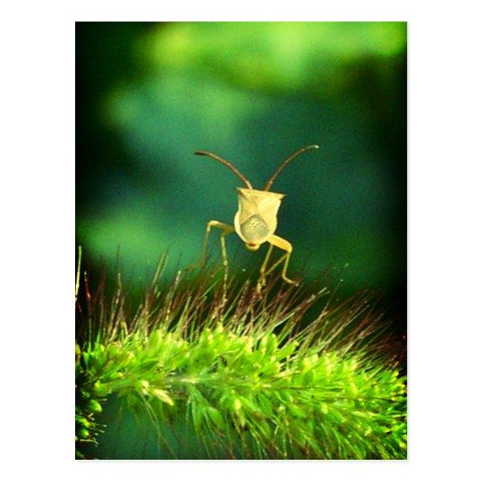 Bug me postcard
