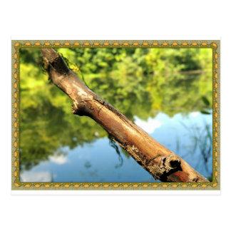 Bug on a Stick Post Card